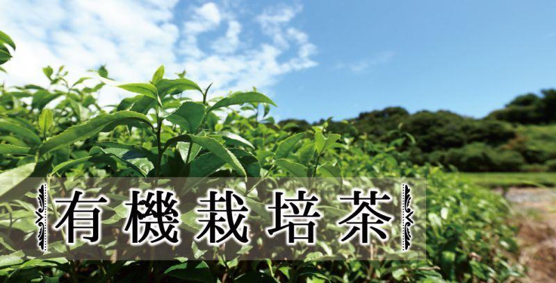 小栗農園の有機栽培茶メイン画像